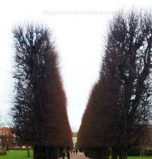 Rosenborg Castle Trees Copenhagen   The Girl Next Door is Black