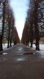 kongsten have Copenhagen trees