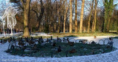 Łazienki Park Ducks | The Girl Next Door is Black