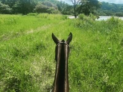 Costa Rica Horseback Ride