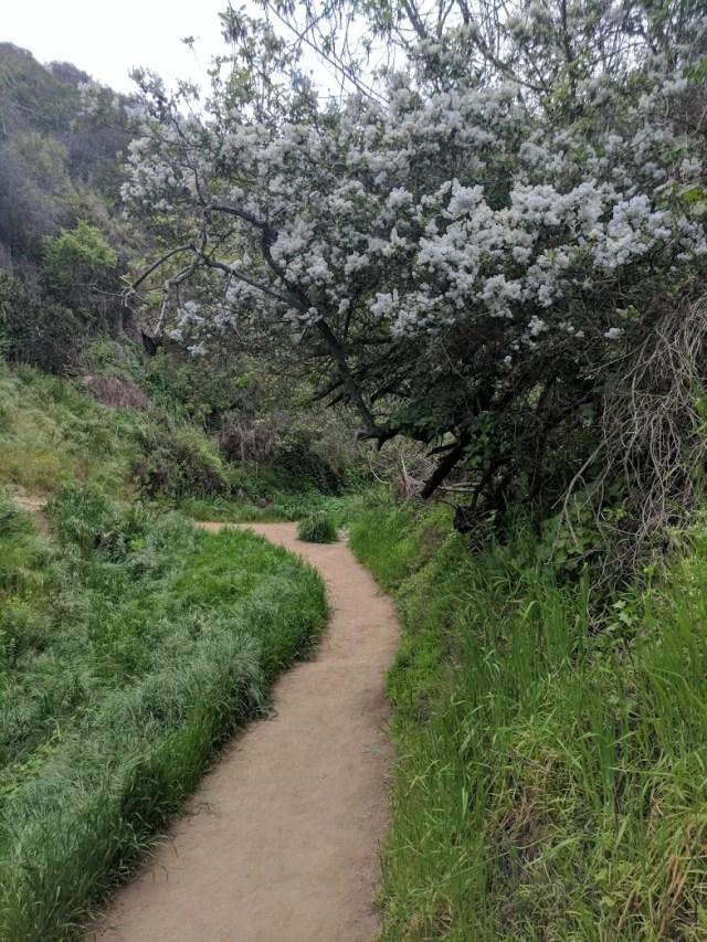 Hiking in LA - Los Leones Trail