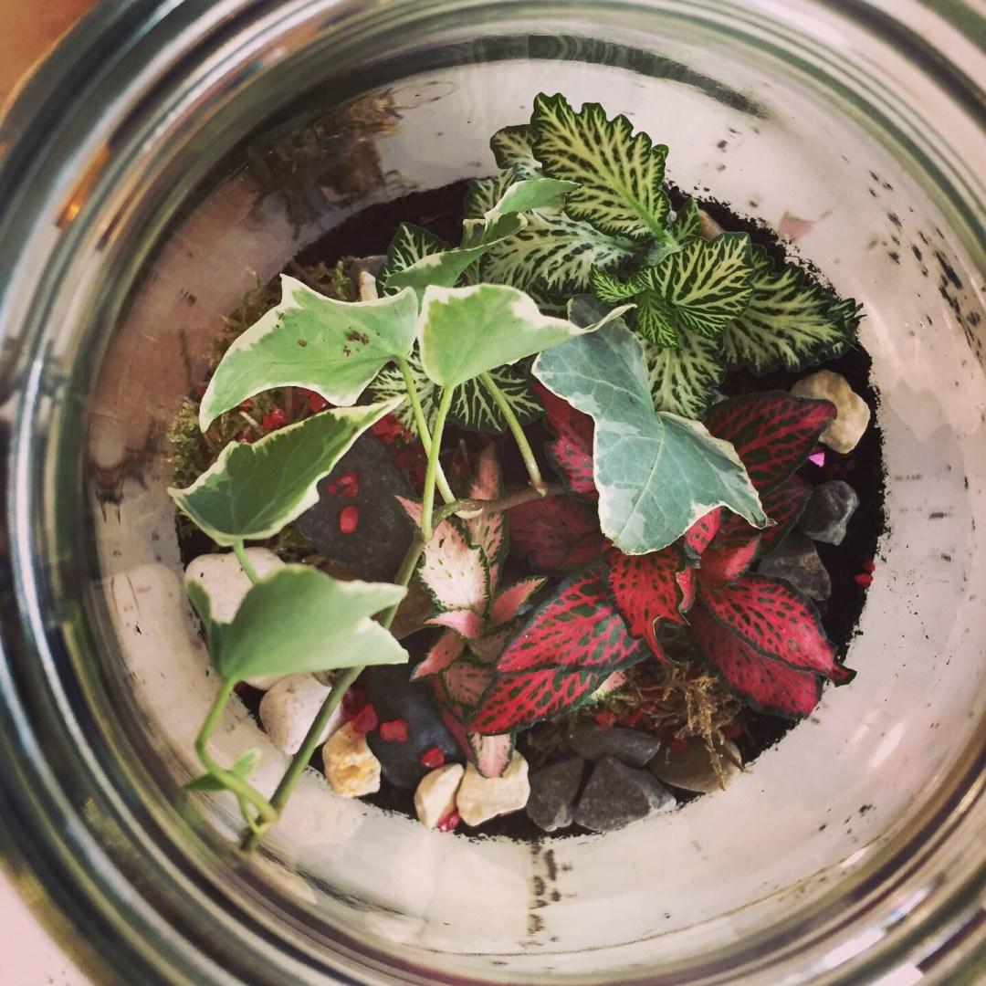 Kilner Jar Terrarium