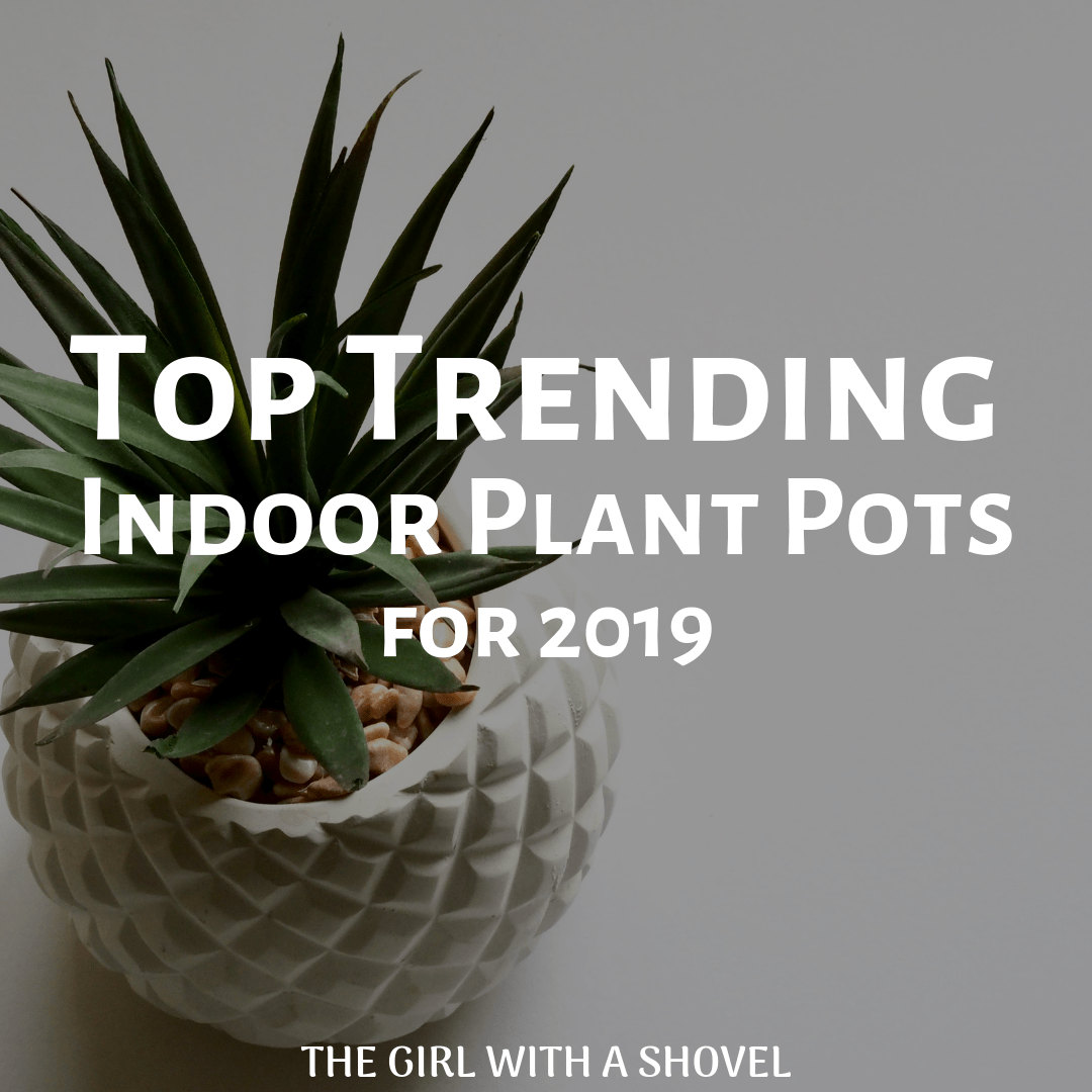 Top 10 Trending Indoor Plant Pots For 2019 The Girl With A Shovel