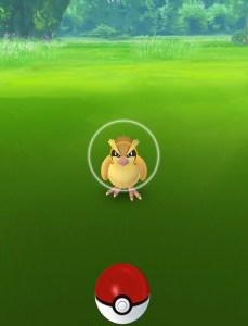 Pidgey targeting