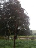 The Heart Tree