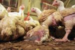 INFOGRAPHIC: Is factory farming making us sick?