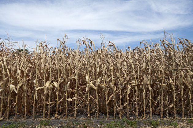 Harvest time?