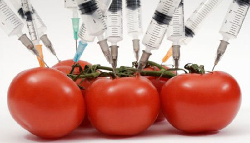 France Bans All GMO Cultivation