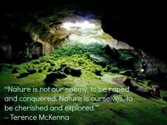 Terence Mckenna Quote