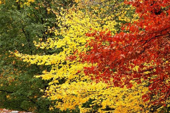 Alaskan Dude Fall Foliage