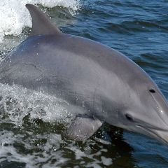 Sentinel Bottlenose Dolphins: Exposure to Toxic Chemicals