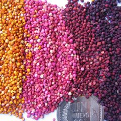 The Golden Grain of the Andes: Are You Ready to Cook?
