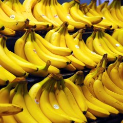 A New Kind of Global Die-Off: Bananas Hit by Rapidly Spreading Diseases