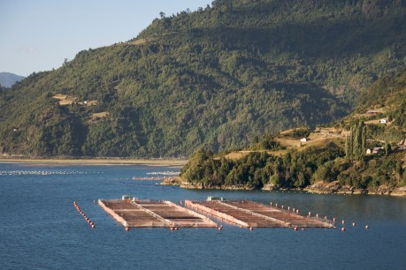 Chilean Salmon Farm