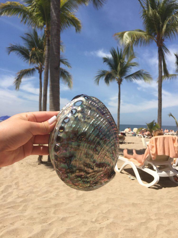 Shell souvenir