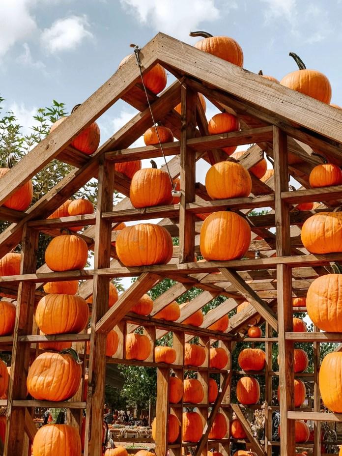 when do you plant pumpkin seeds