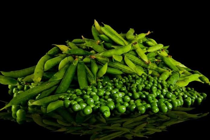 growing peas plant