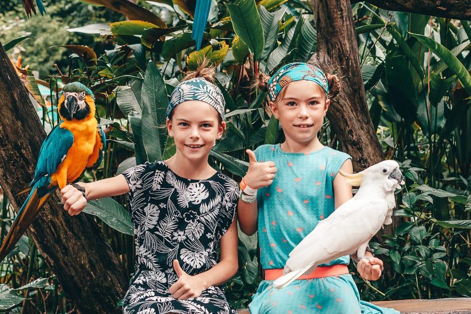 Cockatoo Parrot Wildlife Park Kids Family Fun