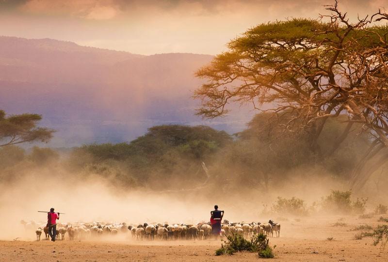 reserve du serengeti tanzani big 5 lion