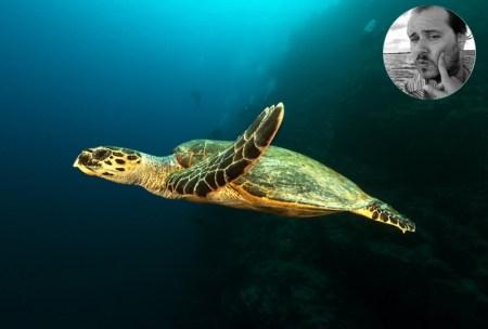Faune sous marine capverdienne a voir