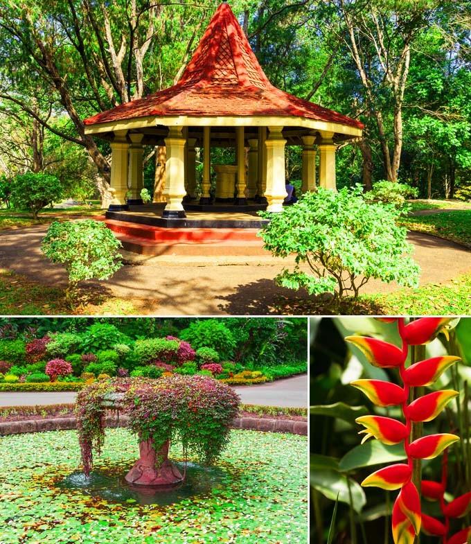 Jardins botaniques de Peradeniya Kandy Sri Lanka
