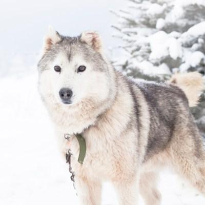 4123-revelstoke-chien-half