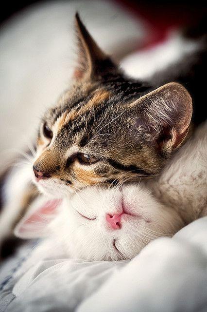 Love feels like kittens snuggling.