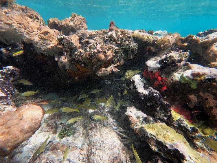 Snorkeling in BVI