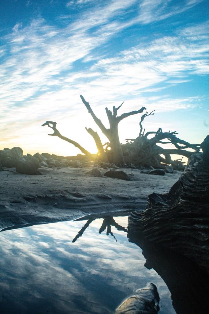 Sunrise on Driftwood Beach on Jekyll Island GA