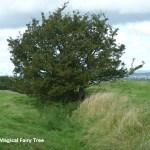 the-magical-fairy-tree-600x