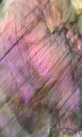Purple Lab2