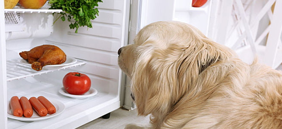 Dog Looking in Fridge