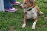 Foxy, sponsored by Sharon Lamond