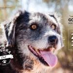 2018 Calendars available – only 5 euros each