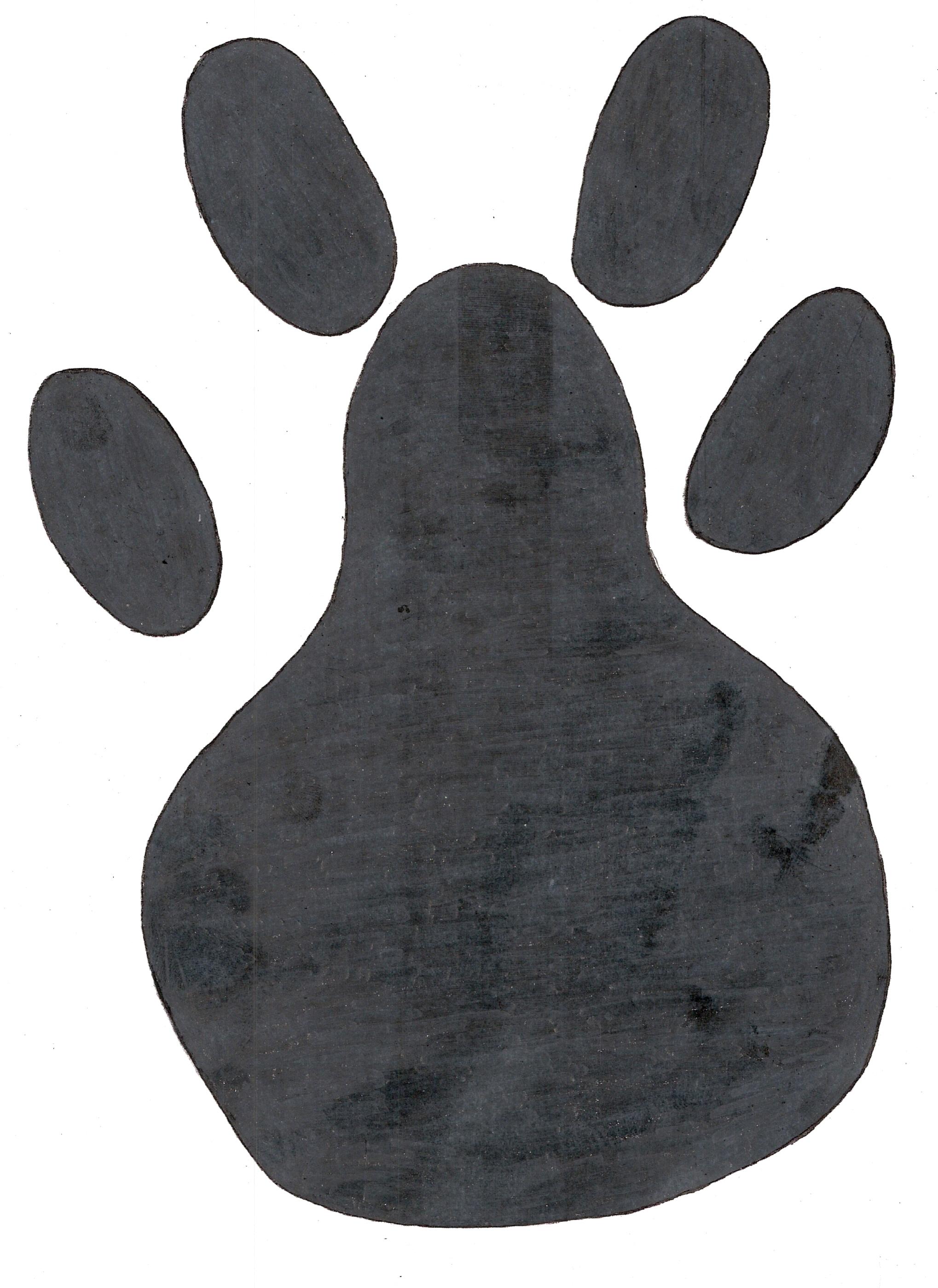 Animal Footprints Identity Mix Amp Match Up Activity