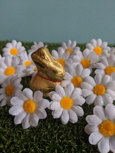 Lindt gold bunny surrounded by daisys
