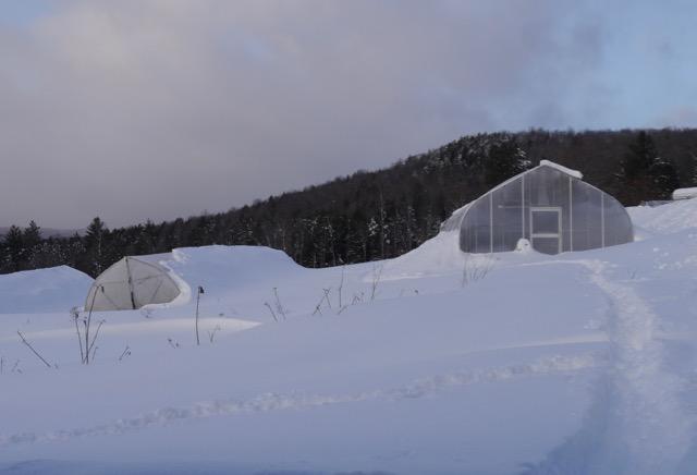 February Greenhouse