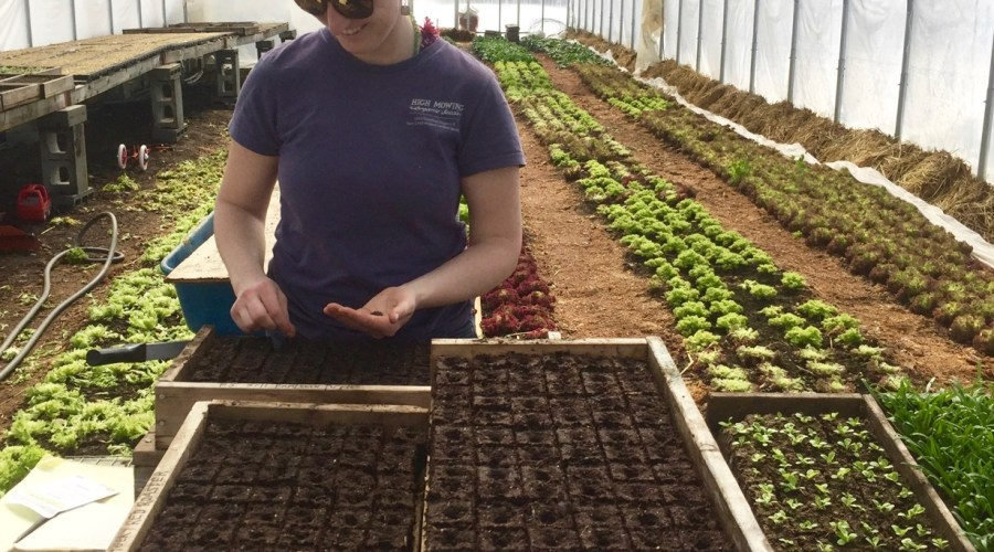 seeding in the greenhouse