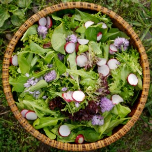 salad with organic chive flowers