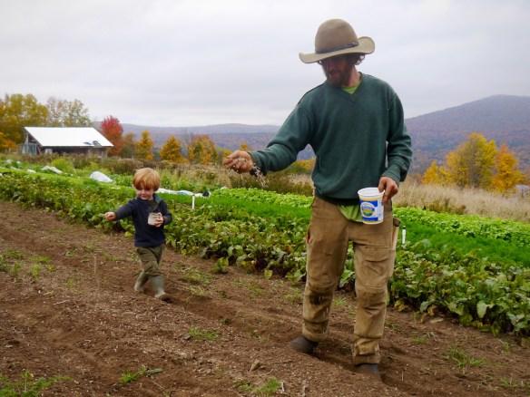 Seeding organic winter rye cover crop