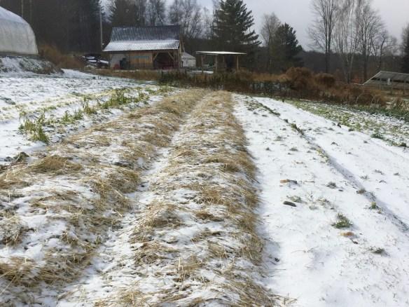 new snow on farm fields