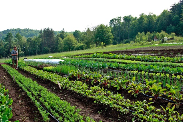 Edge in Rows of vegetables at Good Heart Farm, our first year starting an organic farm