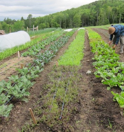 How to Start an Organic Farm with Nothing but a Dream