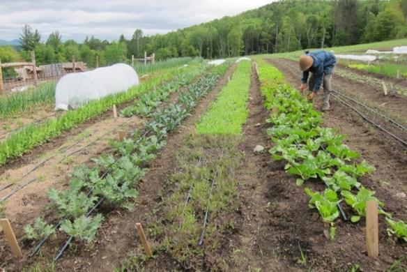 organic market garden, our first year starting an organic farm