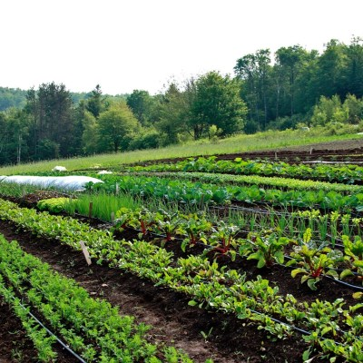 Edge in the garden during our first year of running our organic farm, Good Heart Farmstead