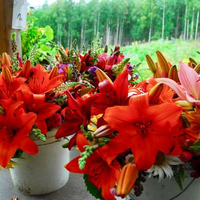 Organic Flower Bouquets at Calypso Farm