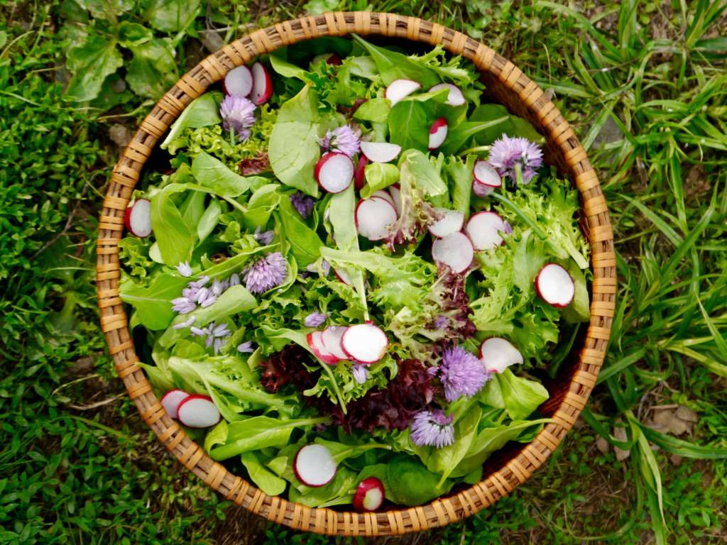 Spring mesclun mix, learn how to grow mesclun mix