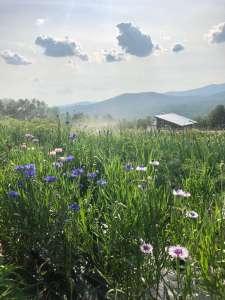 Good Heart Farmstead fields in July