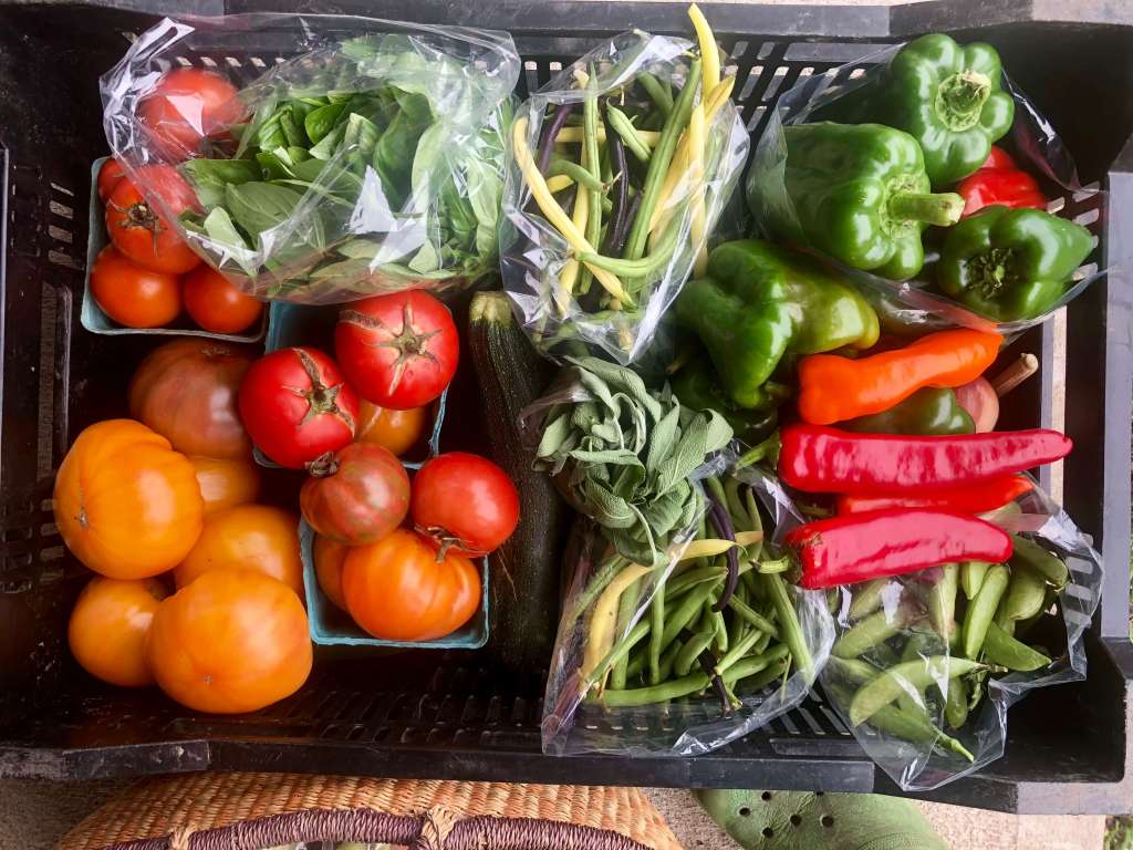 Veggies packed for vacation; how to take a vacation when you have a small farm
