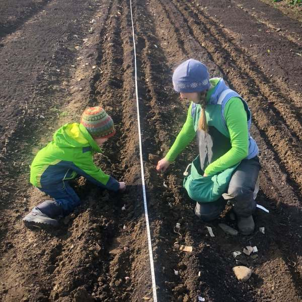 Planting Garlic with Kids: what can grow from soil & cloves
